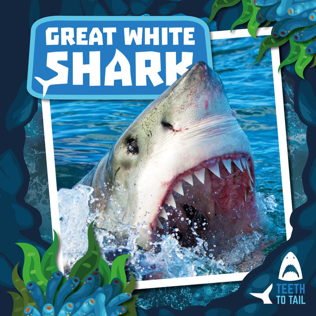 Teeth to Tail: Great White Shark | Children's Books | Non-Fiction Books | BookLife Publishing Ltd