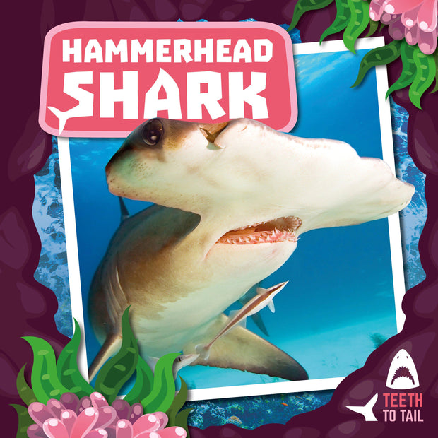 Teeth to Tail: Hammerhead Shark | Children's Books | Non-Fiction Books | BookLife Publishing Ltd