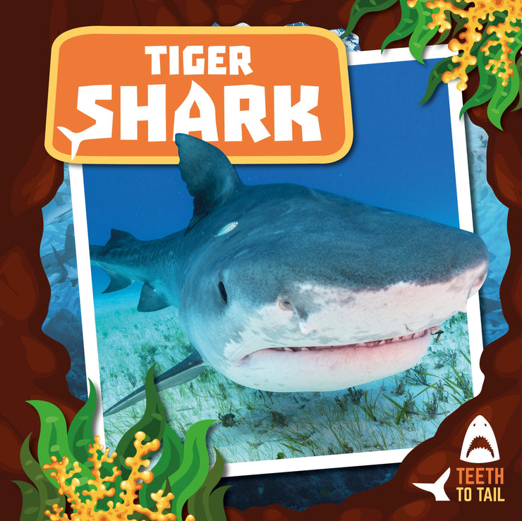 Teeth to Tail: Tiger Shark | Children's Books | Non-Fiction Books | BookLife Publishing Ltd