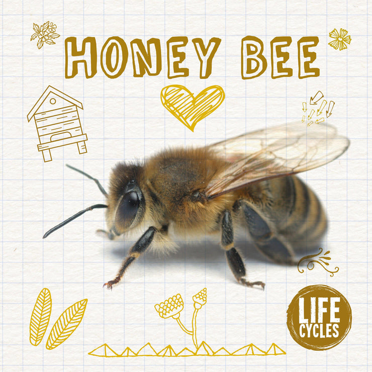 Life Cycles: Life Cycle of a Bee | Children's Books | Non-Fiction Books | BookLife Publishing Ltd