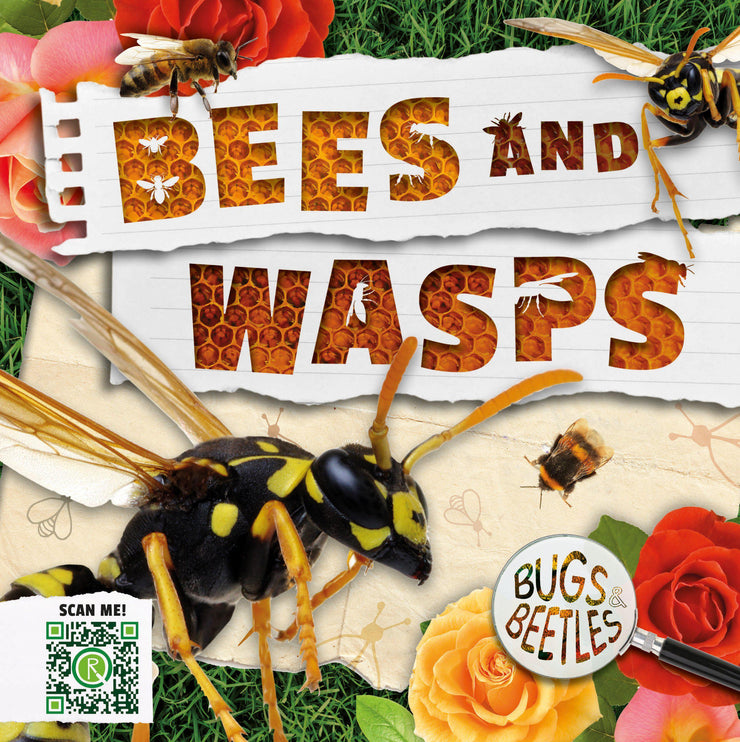 Bugs and Beetles: Bees and Wasps | Children's Books | Non-Fiction Books | BookLife Publishing Ltd