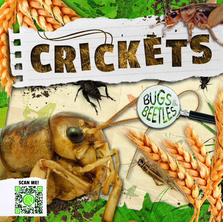 Bugs and Beetles: Crickets | Children's Books | Non-Fiction Books | BookLife Publishing Ltd