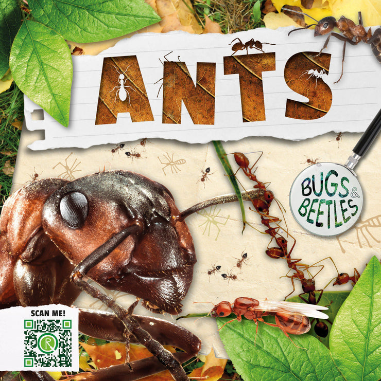 Bugs and Beetles: Ants | Children's Books | Non-Fiction Books | BookLife Publishing Ltd