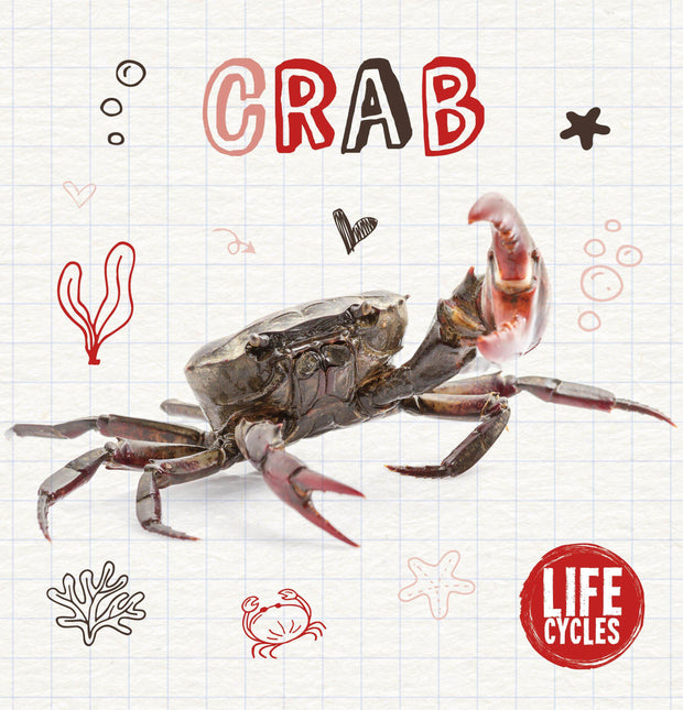 Life Cycles: Crab | Children's Books | Non-Fiction Books | BookLife Publishing Ltd