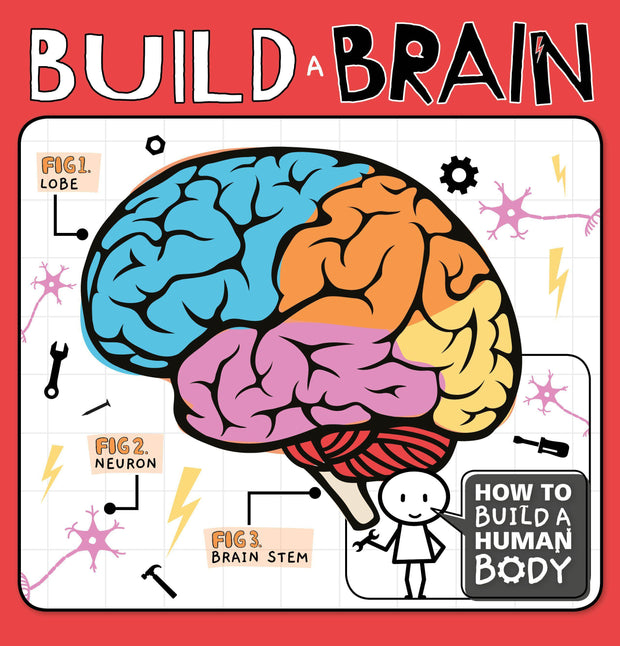 How to Build a Human Body: Build a Brain | Children's Books | Non-Fiction Books | BookLife Publishing Ltd