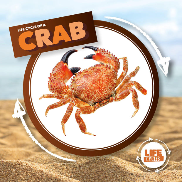 Life Cycle of a: Crab