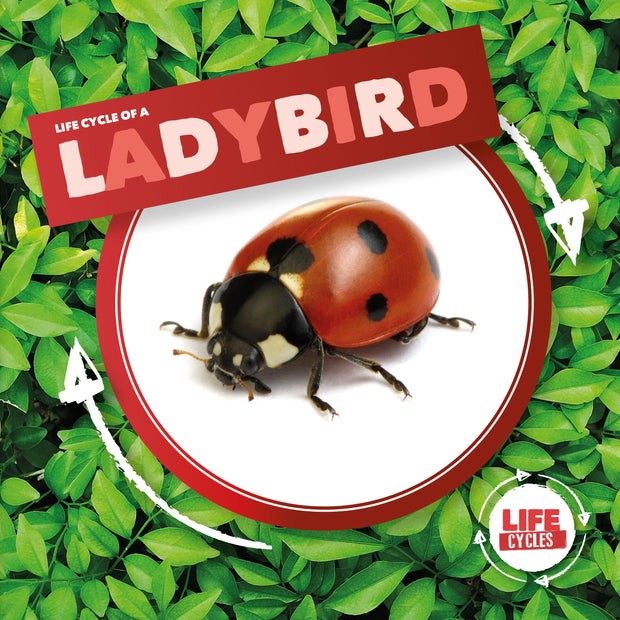 Life Cycle of a: Ladybird