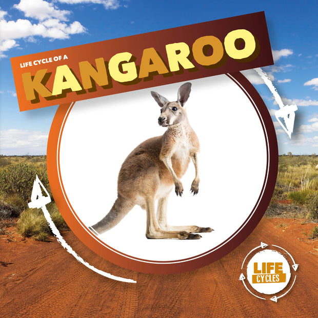 Life Cycle of a: Kangaroo