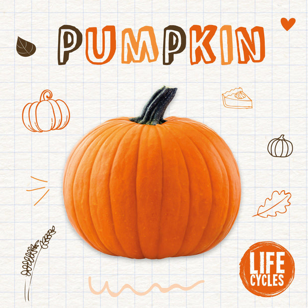 Life Cycles: Pumpkin
