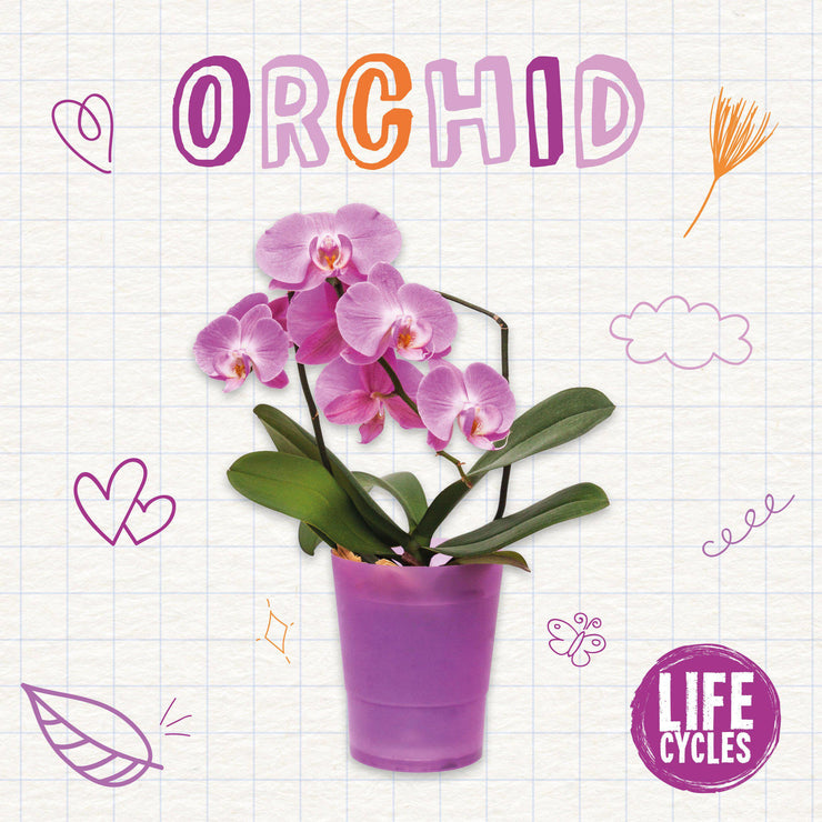 Life Cycles: Orchid
