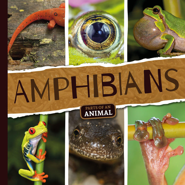 Parts of an Animal: Amphibians | Children's Books | Non-Fiction Books | BookLife Publishing Ltd