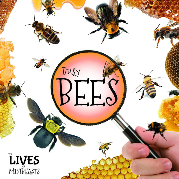 The Lives Of Minibeasts: Bees