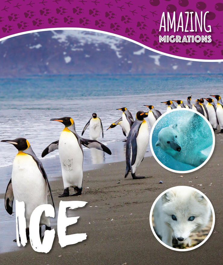 Amazing Migrations: Ice | Children's Books | Non-Fiction Books | BookLife Publishing Ltd