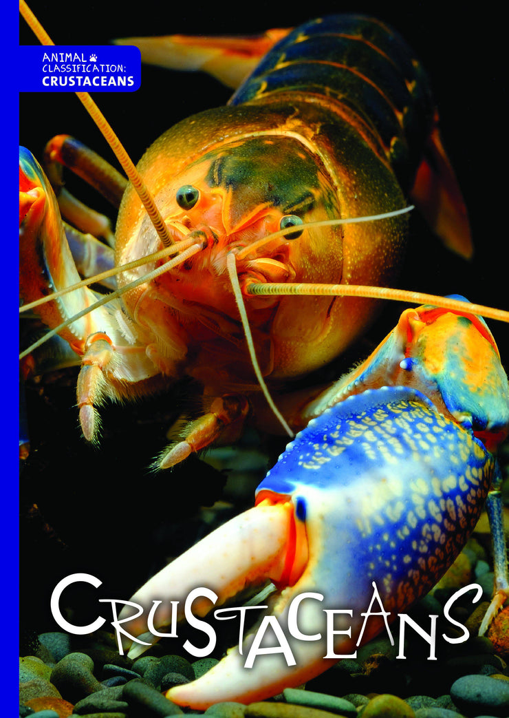 Animal Classification: Crustaceans | Children's Books | Non-Fiction Books | BookLife Publishing Ltd
