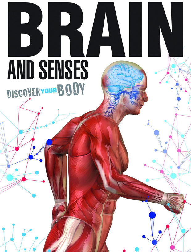 Discover Your Body: Brain and Senses | Children's Books | Non-Fiction Books | BookLife Publishing Ltd