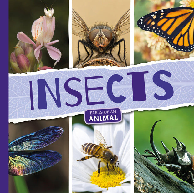 Parts of an Animal: Insects | Children's Books | Non-Fiction Books | BookLife Publishing Ltd