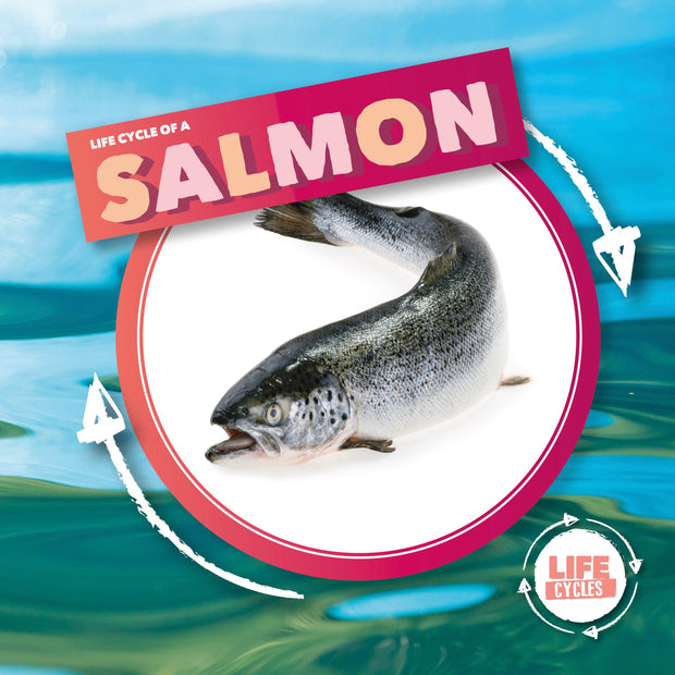 Life Cycle Of A: Salmon