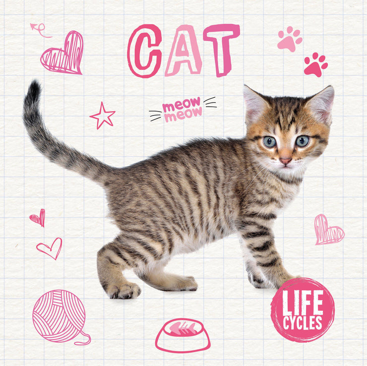 Life Cycles: Cat | Children's Books | Non-Fiction Books | BookLife Publishing Ltd