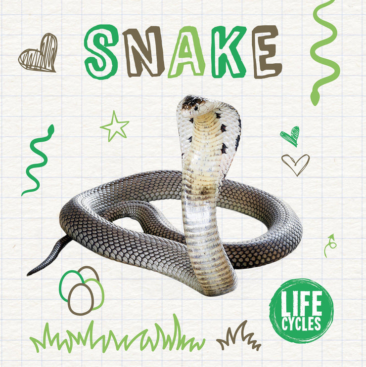 Life Cycles: Snake | Children's Books | Non-Fiction Books | BookLife Publishing Ltd
