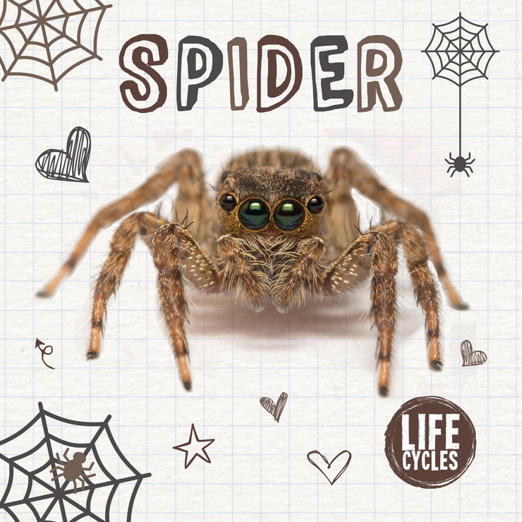 Life Cycles: Spider | Children's Books | Non-Fiction Books | BookLife Publishing Ltd