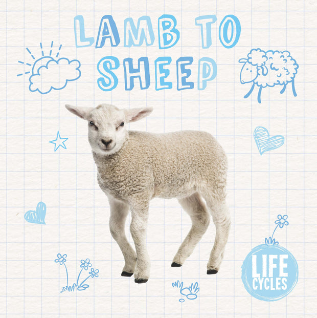 Life Cycles: Lamb to Sheep | Children's Books | Non-Fiction Books | BookLife Publishing Ltd