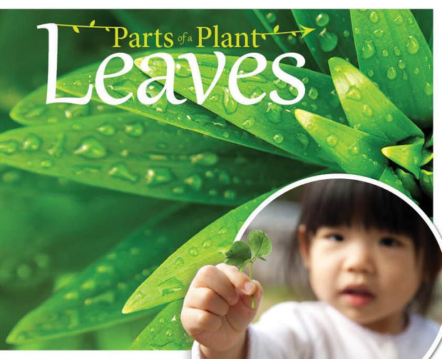 The Parts of a Plant: Leaves | Children's Books | Non-Fiction Books | BookLife Publishing Ltd