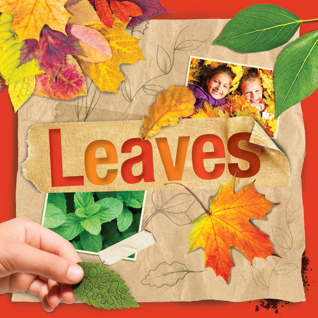 Plant Parts: Leaves | Children's Books | Non-Fiction Books | BookLife Publishing Ltd