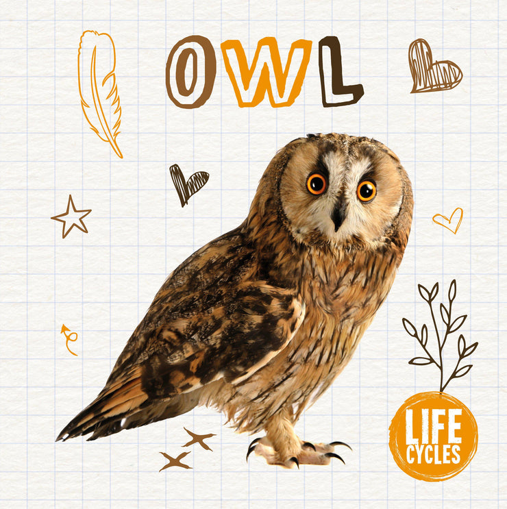 Life Cycles: Owl | Children's Books | Non-Fiction Books | BookLife Publishing Ltd