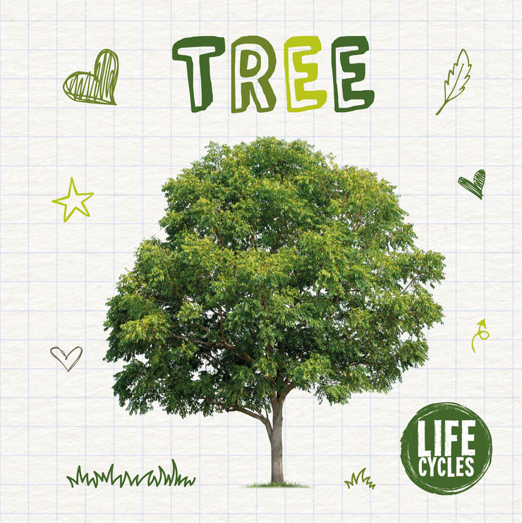 Life Cycles: Tree | Children's Books | Non-Fiction Books | BookLife Publishing Ltd