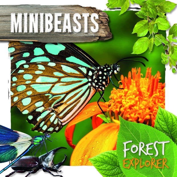 Forest Explorer: Minibeasts | Children's Books | Non-Fiction Books | BookLife Publishing Ltd