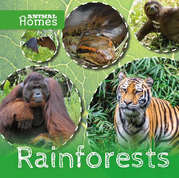 Animal Homes: Rainforests | Children's Books | Non-Fiction Books | BookLife Publishing Ltd