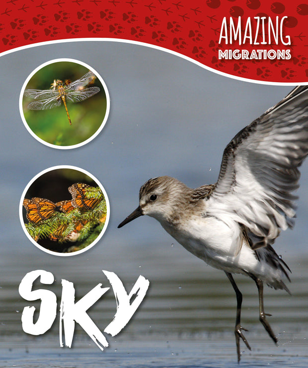 Amazing Migrations: Sky | Children's Books | Non-Fiction Books | BookLife Publishing Ltd