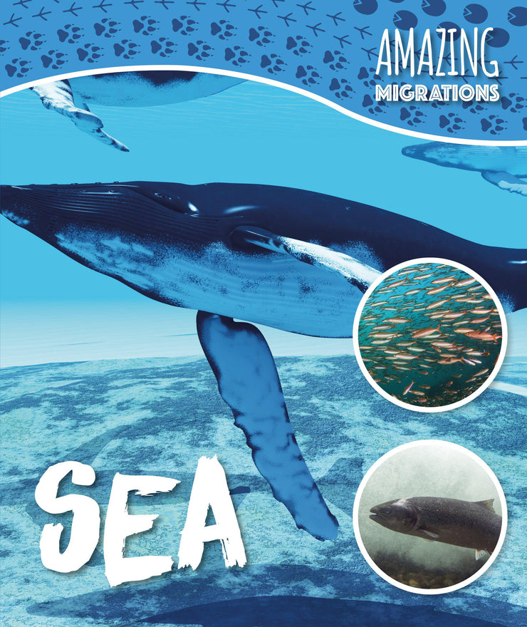 Amazing Migrations: Sea | Children's Books | Non-Fiction Books | BookLife Publishing Ltd