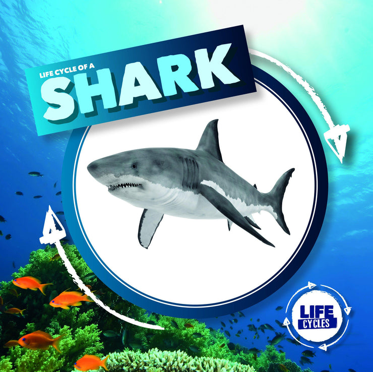 Life Cycle of a Shark | Children's Books | Non-Fiction Books | BookLife Publishing Ltd