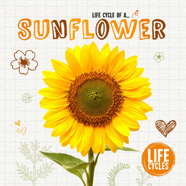 Life Cycles: Sunflower | Children's Books | Non-Fiction Books | BookLife Publishing Ltd