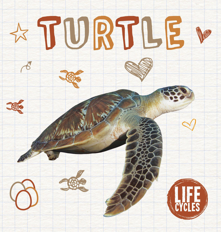 Life Cycles: Turtle | Children's Books | Non-Fiction Books | BookLife Publishing Ltd