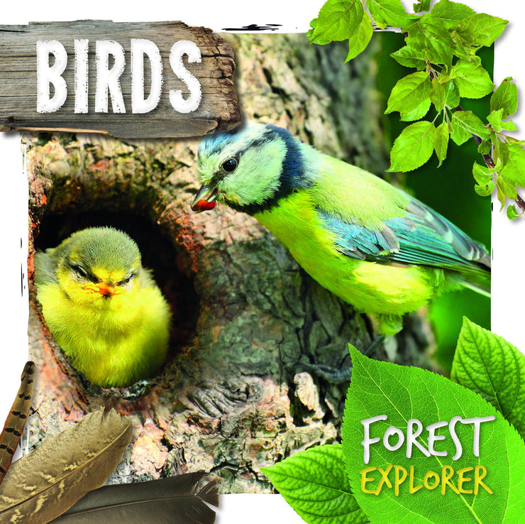 Forest Explorer: Birds | Children's Books | Non-Fiction Books | BookLife Publishing Ltd