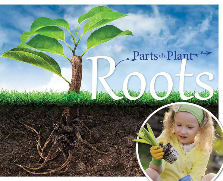 The Parts of a Plant: Roots | Children's Books | Non-Fiction Books | BookLife Publishing Ltd