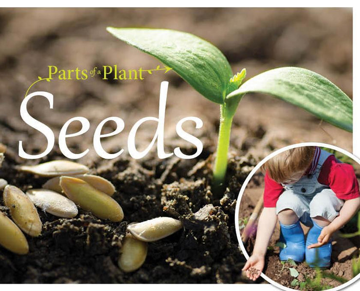 The Parts of a Plant: Seeds | Children's Books | Non-Fiction Books | BookLife Publishing Ltd
