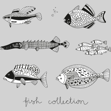 Hand Drawn 6 Fish Collection