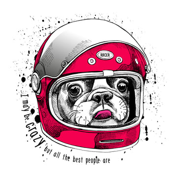 French Bulldog In a Modern Racer Biking Helmet