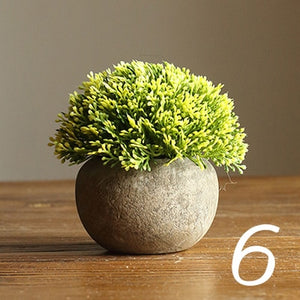 Bonsai Coffee Green Succulents Potted Plants - Seasons Forever