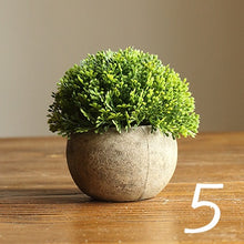 Load image into Gallery viewer, Bonsai Coffee Green Succulents Potted Plants - Seasons Forever