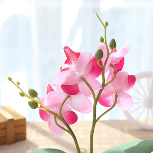 Stone Artificial Butterfly Orchid Silk Flowers - Seasons Forever