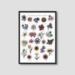 LANGUAGE OF FLOWERS BY RHEANNON ORMOND (A3 - FRAMED)
