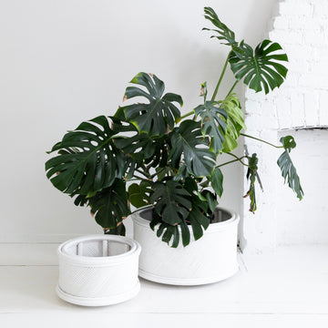 Tommy Planter Large - White