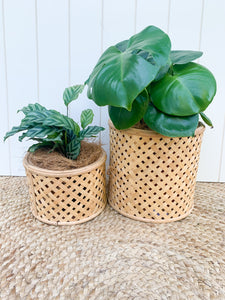 *NEW* Round Cane Planter/ Basket