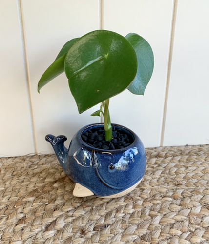 Baby Whale Planter