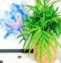Load image into Gallery viewer, Parlor Palm Kokedama