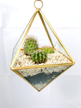 Load image into Gallery viewer, DIY Cactus Terrarium Kit